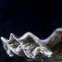 oester2 klein